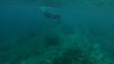 manta 2